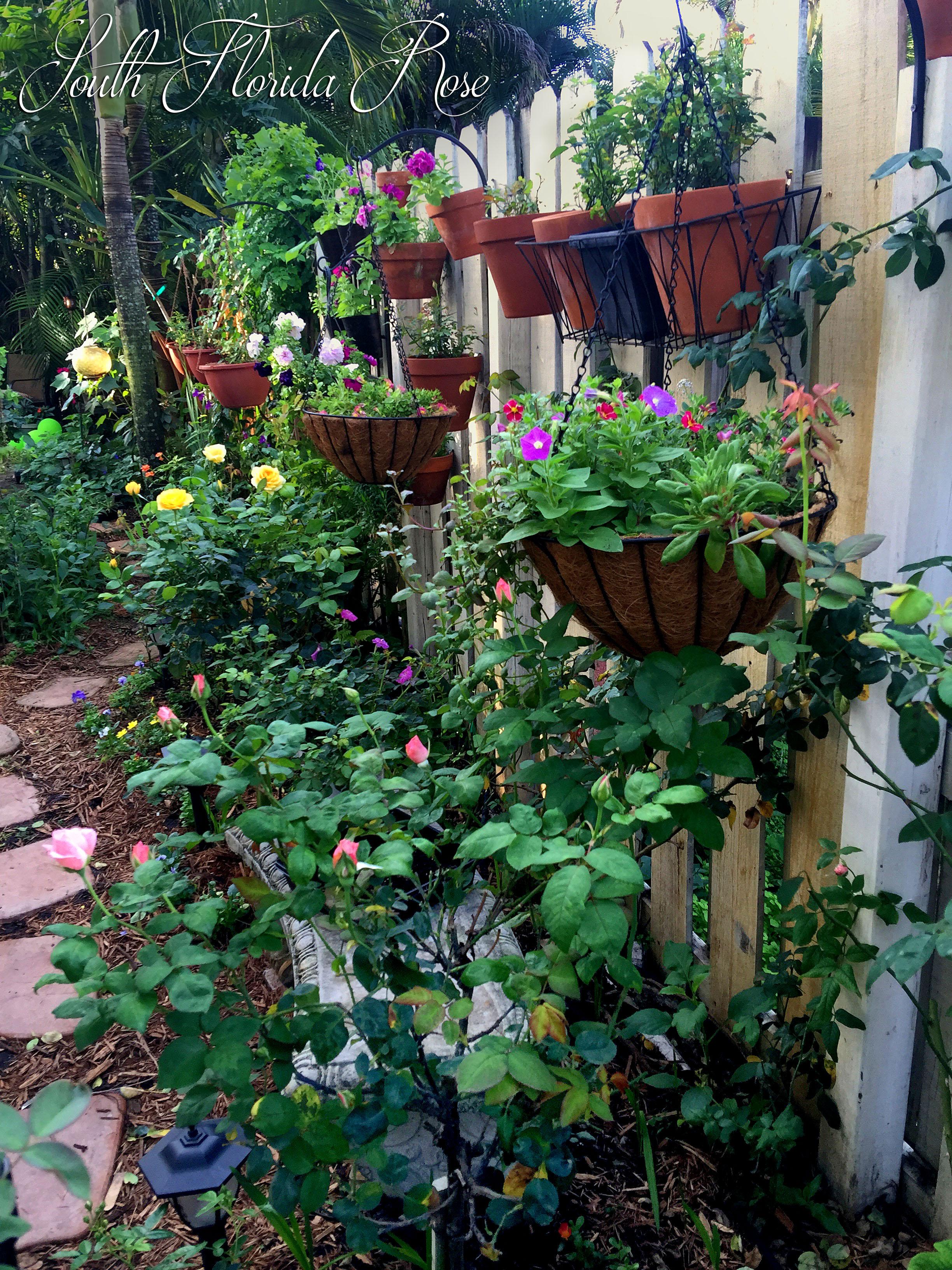 A Rose Garden In South Florida