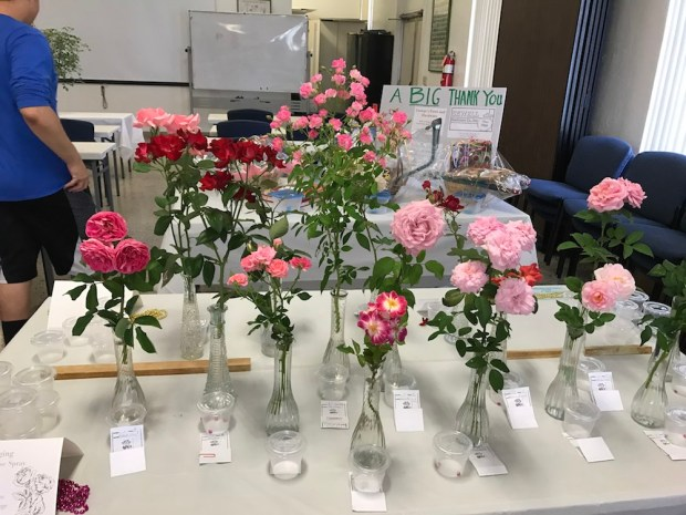2017 GPBRS Spring Rose Show
