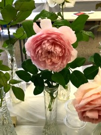 The 2017 Greater Palm Beach Rose Society Rose Show