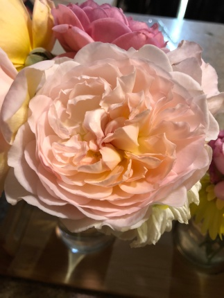 Bliss, although new, shows every sign of being a great rose.