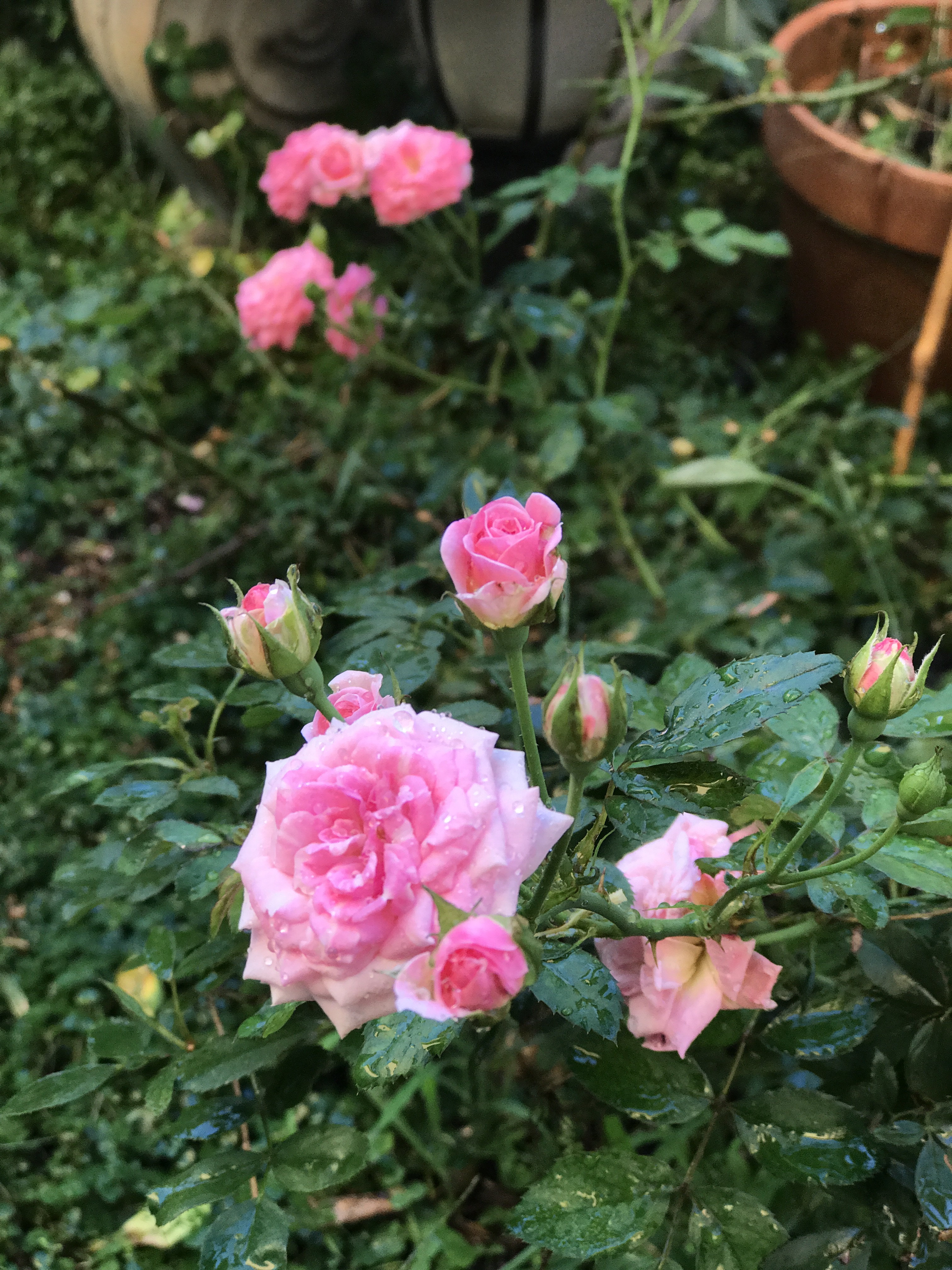 South Florida Rose\'s 2017 Rose Awards! – South Florida Rose
