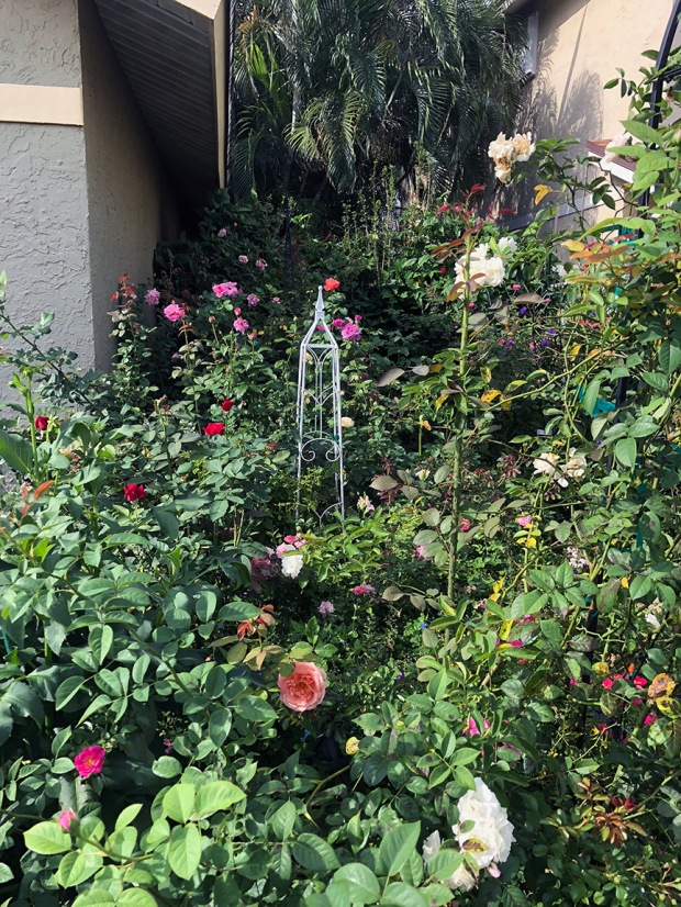 Rose_Garden02