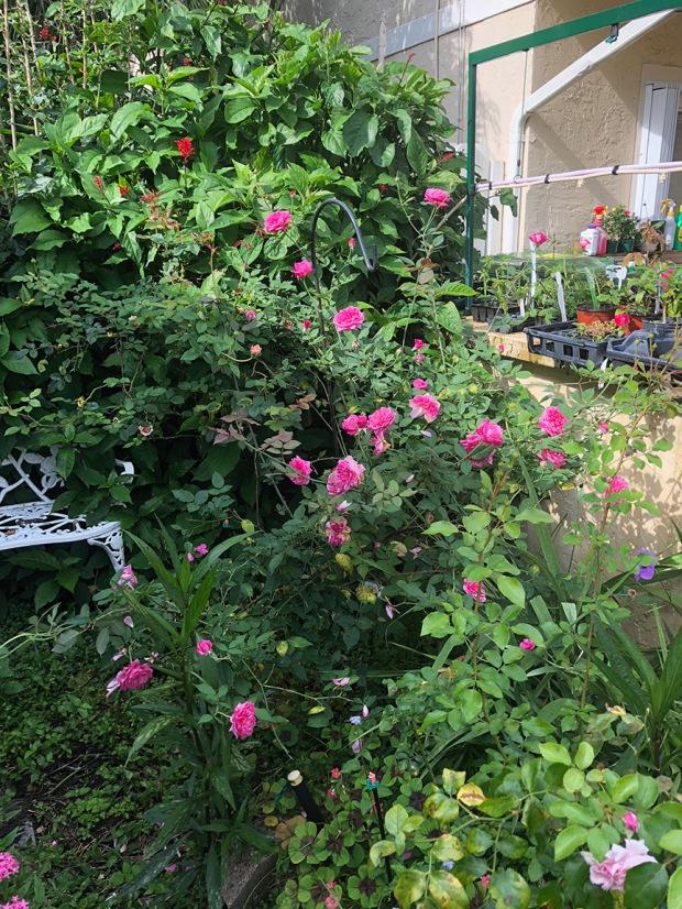 Rose_Garden06
