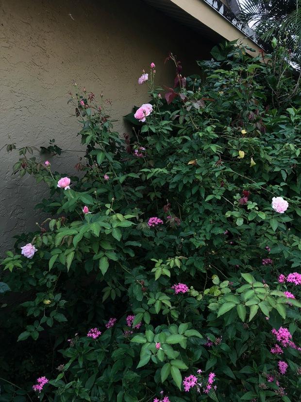 Rose_Garden07