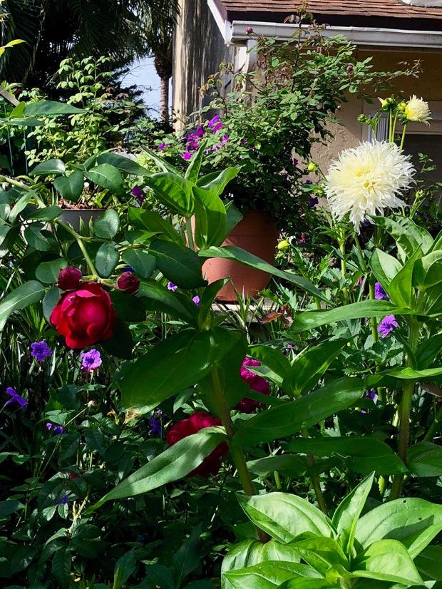 Rose_Garden11